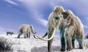 Descubren el esqueleto de un mamut lanudo prácticamente intacto en Siberia