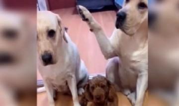 Perro que delata a su amigo con la pata, el vídeo que es furor en TikTok
