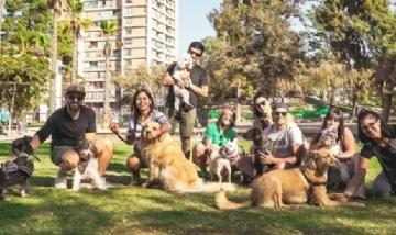 La familia canina de Bigmama, desde Santiago de Chile.