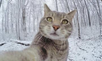 Día Mundial del Gato: ¿Por qué se celebra hoy?