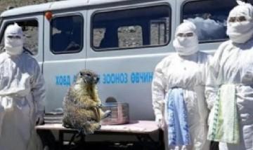 Un chico de 15 años falleció por peste bubónica tras haber cazado y comido una marmota